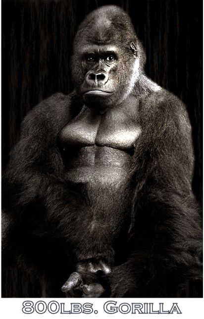800lbs Gorilla