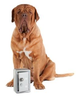 big dog over safe