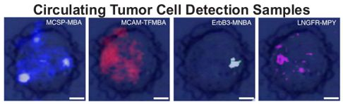 Circulating Tumor Cell Detection Samples
