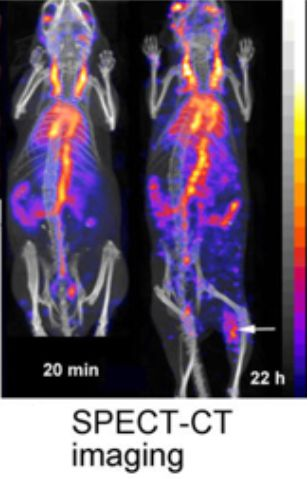 gold nano-particle spect_ct imaging