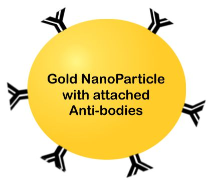 gold nanoparticle with anti-bodies