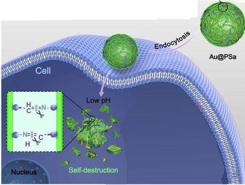 Polysaccharide - Gold Nanoparticle 2018 - Cancer Killers